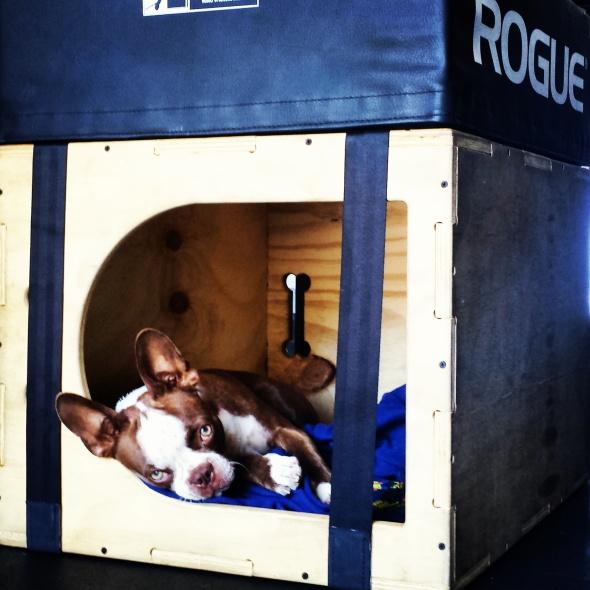 Apollo in Box Pic